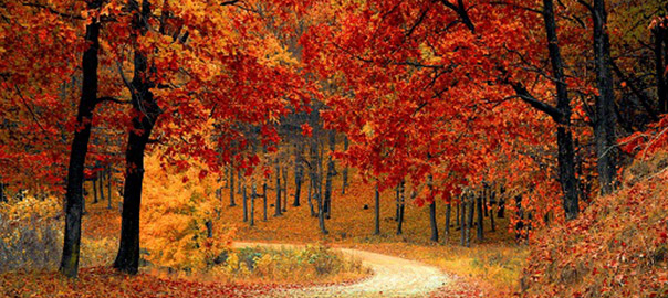02_negative-space-autumn-fall-path-forest-pixabay_rev