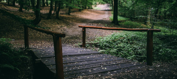 kaboompics_Wooden-bridge-in-a-forest